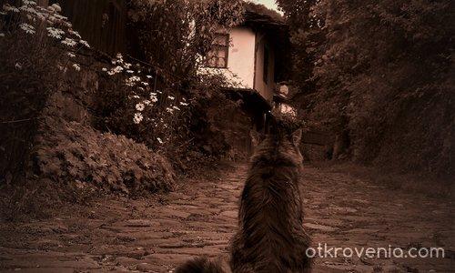 Старата котка на стария път