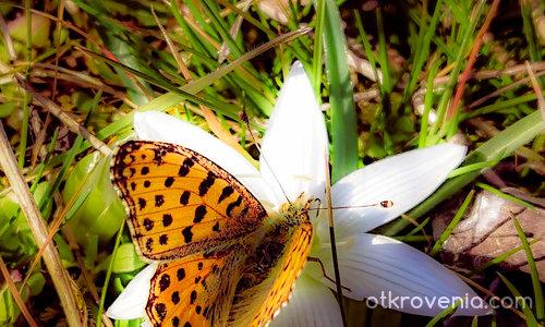 Звезда и пеперуда
