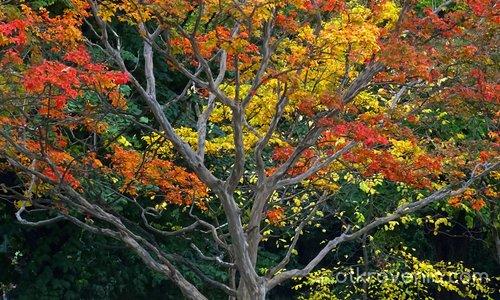 Есенни багри...