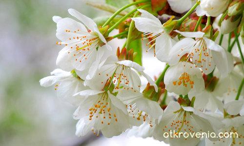 Пролет моя