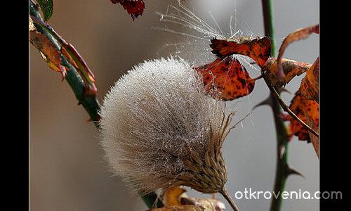 Изплакана есен