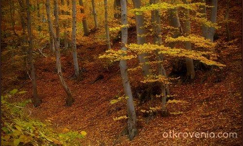 Горска есен