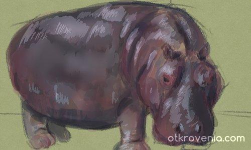 Хипопотамче