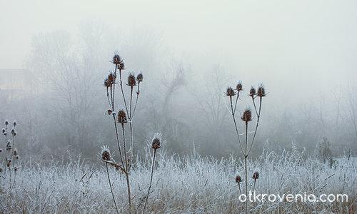 Скрежът - крехкото дихание на зимата - 10