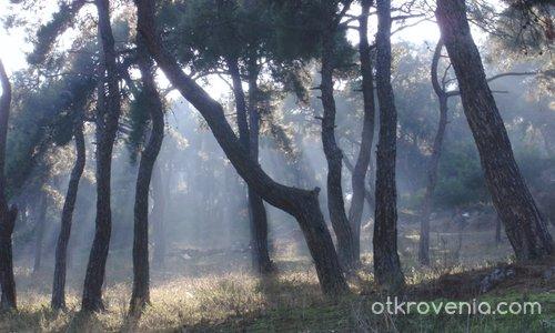 Тънка пелена от есенна мъгла