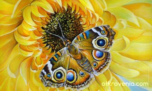 Паунова пеперуда