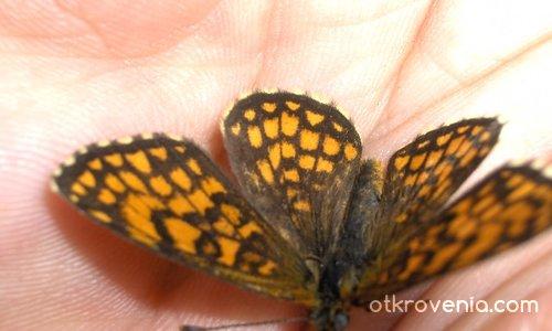 Пеперудка