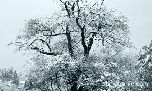 Самотно дърво за посрещане и изпращане