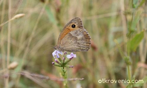 Пеперуда