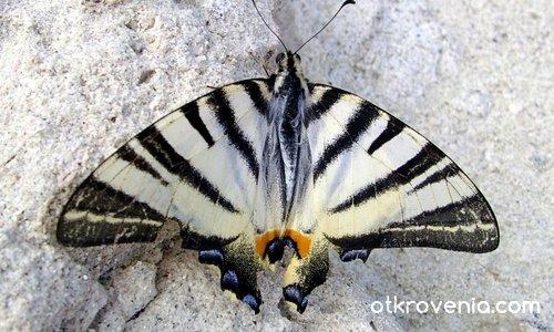 Пеперуда - царица !