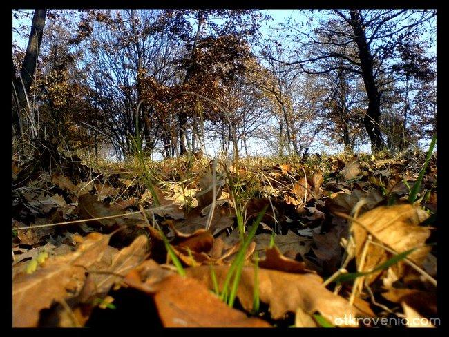 В едно с тревите