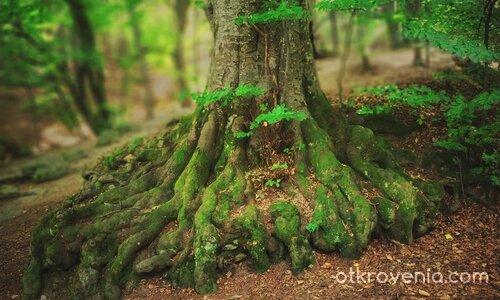 Октопод в гората