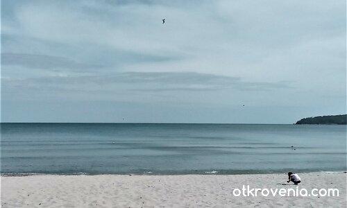 Момиче, море, птици...