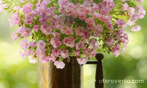 Кана с цвете
