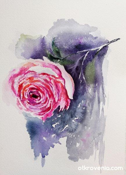 Роза а ла прима