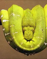 Green_Snake (Ад)