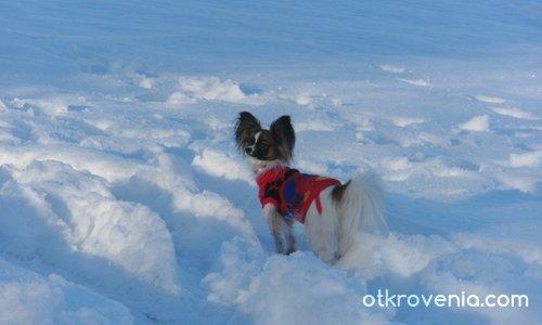 Колко много сняг, ехааа.....