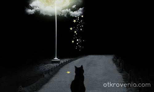 Лунно коте