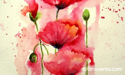 Poppies for ever...