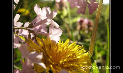 Пролетна палитра