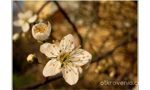 С аромат на пролет I