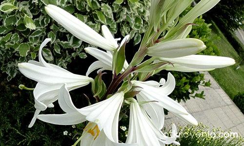 ...и дано 2012 запази белия цвят неопетнен...