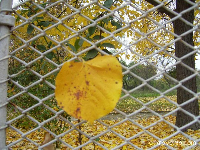 Тъжна есен...
