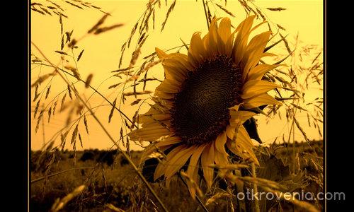 Когато слънцето се сбогува (Есенно усещане)