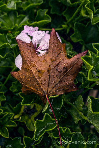 Прегърни ме преди есенния вятър