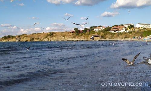 Птици над морето