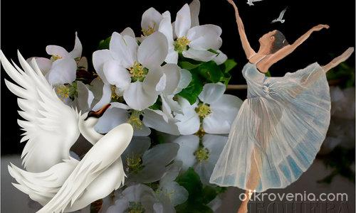 Танцуваща бяла птица