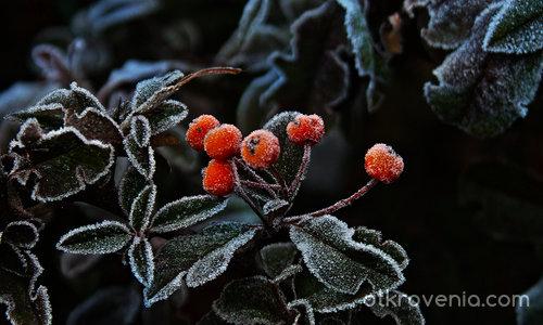 Скрежът  - крехкото дихание на зимата