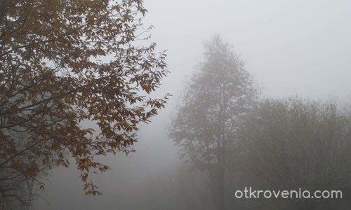 В гората,в мъглата...