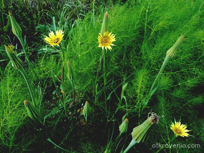 И в джунглата на тъмните мисли израстват слънчеви цветя...