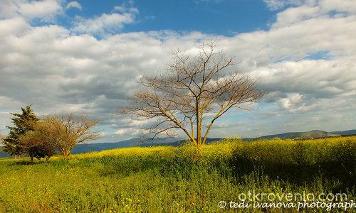 Пролет в ливадата