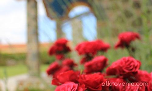 Рози...