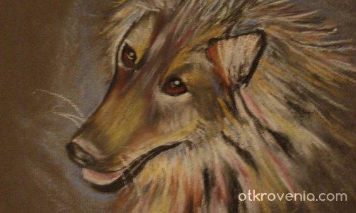 Портрет - куче