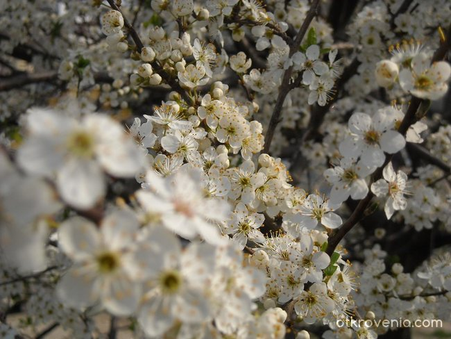 """...моя бяла пролет."""