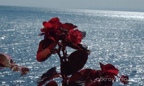 """""""Ябълка"""" и море"""