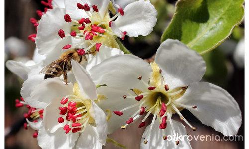 С аромат на пролет І