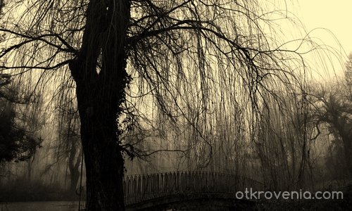 Мъглив следобед