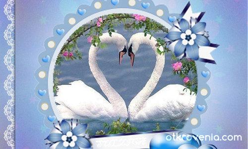 Любовта на лебедите