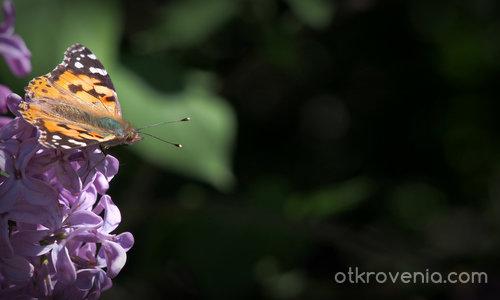 Пеперудена пролет