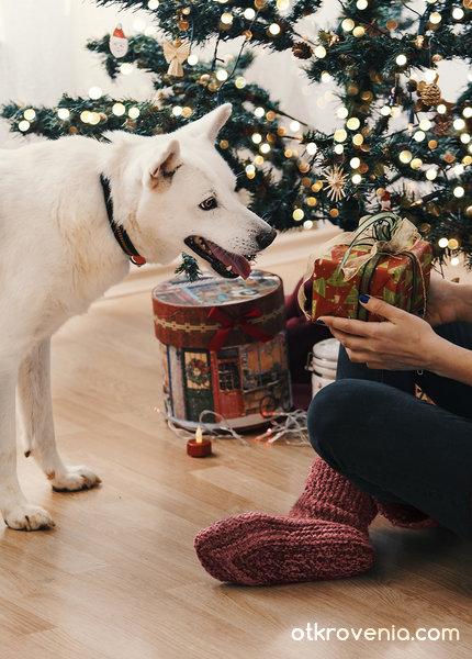Тази Коледа си пожелавам... дом