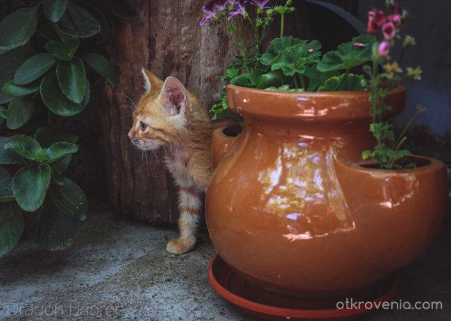 Любопитно коте