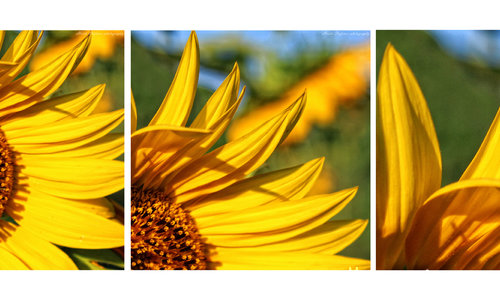 Август е слънчево намигване...
