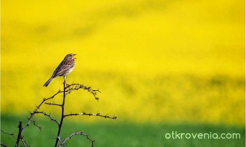 Пролетна песен