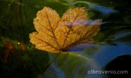Настроение за есен