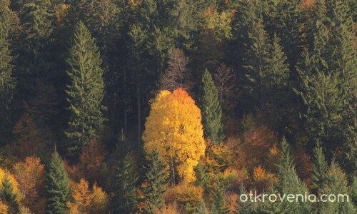 Петната на есента