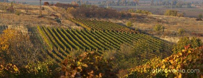В молитва за младото вино край Брестовица